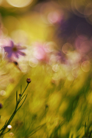 Flower Bokeh Spring IPhone Wallpaper Mobile Wallpaper