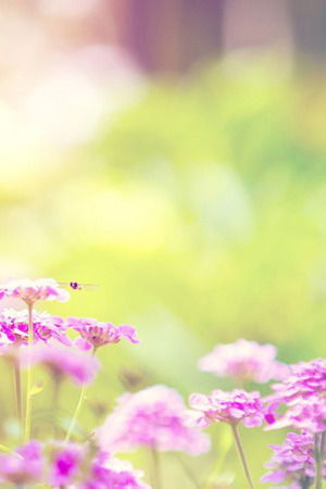 Pink Flowers Field Bokeh IPhone Wallpaper Mobile Wallpaper
