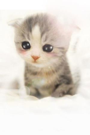 Cute Thinking Kitten Mobile Wallpaper