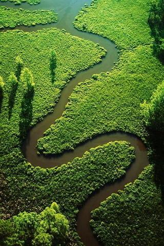 Green Field River & Wildlife IPhone Wallpaper Mobile Wallpaper