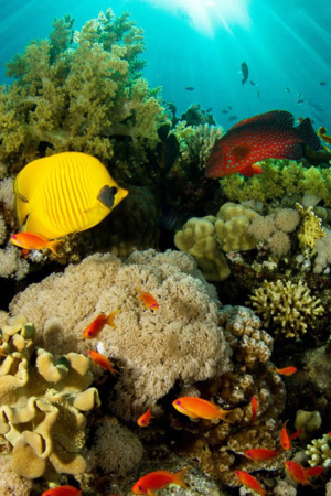 Aquarium Coral Reef Fish IPhone Wallpaper Mobile Wallpaper