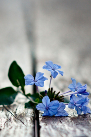 Blue Flowers On Road IPhone Wallpaper Mobile Wallpaper