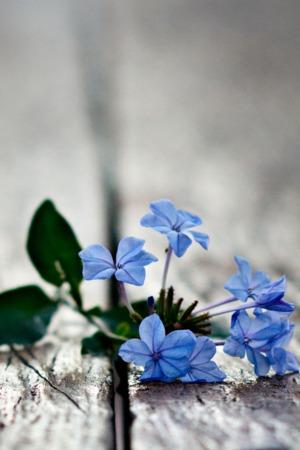 Blue Flowers On Road IPhone Wallpaper Mobile Wallpaper