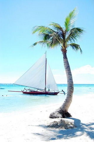 Tropical Tree & Boat IPhone Wallpaper Mobile Wallpaper