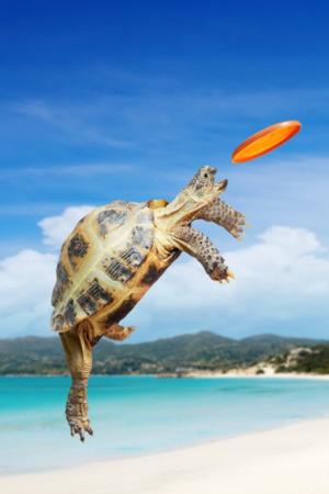 Turtle Tortoise Frisbee Mobile Wallpaper