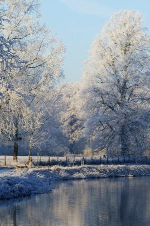Frozen Mist Forest & River IPhone Wallpaper Mobile Wallpaper