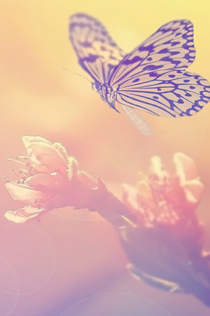 Fairy Butterfly On Pink Flower IPhone Wallpaper Mobile Wallpaper