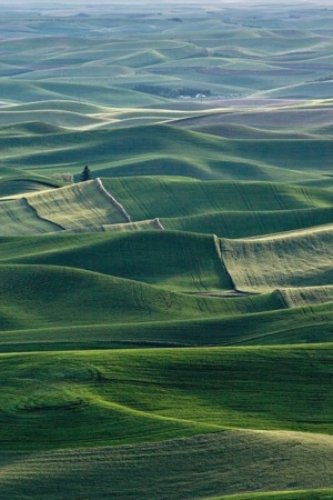 Washington Palouse IPhone Wallpaper Mobile Wallpaper