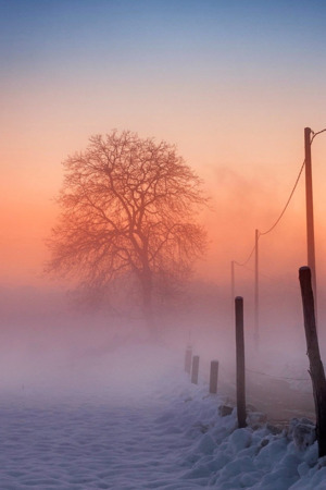 Winter Fog Morning IPhone Wallpaper Mobile Wallpaper