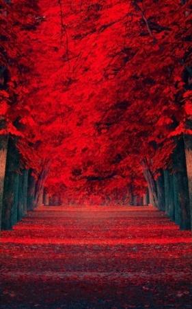 Resmist Autumn Way Garden IPhone Wallpaper Mobile Wallpaper