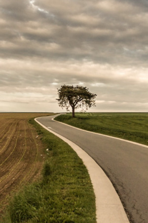 Roadside Tree Alone Field Nature IPhone Wallpaper Mobile Wallpaper