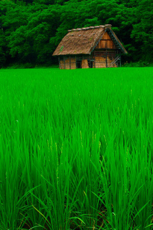 Green Grass Fresh On House Nature IPhone Wallpaper Mobile Wallpaper
