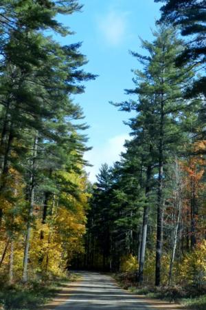 Autumn Nature Road Jungle IPhone Wallpaper Mobile Wallpaper
