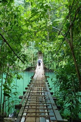 Costa Rica Footbridge Drakes Bay Nature IPhone Wallpaper Mobile Wallpaper