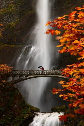 Falls Water Bridge Portland Oregon Nature IPhone Wallpaper Mobile Wallpaper