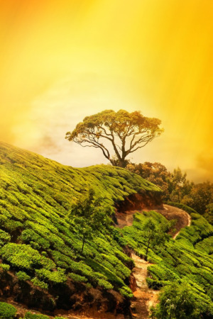 Tree On Mounatain Yellow Sky Sunset IPhone Wallpaper Mobile Wallpaper