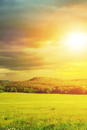 Sunshine Grassland IPhone Wallpaper Mobile Wallpaper