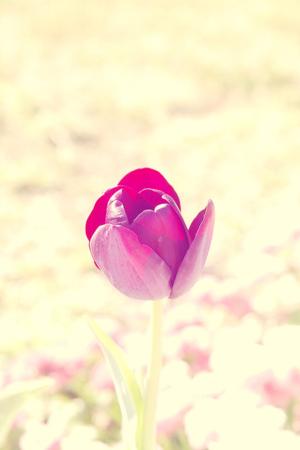 Love Pink Flower Nature IPhone Wallpaper Mobile Wallpaper