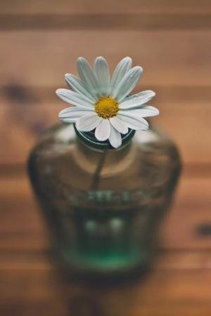White Flower Cute Decor IPhone Wallpaper Mobile Wallpaper