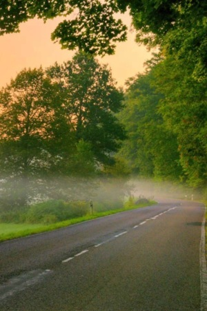 Forest Green Morning Road IPhone Wallpaper Mobile Wallpaper