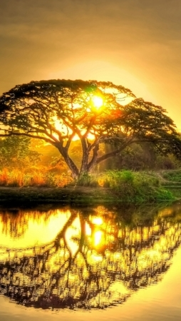 Natural Sunset Trees Reflections IPhone Wallpaper Mobile Wallpaper