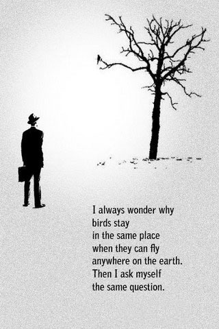 Why Bird Stay IPhone Wallpaper Mobile Wallpaper