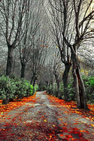 Falls Autumn Leaves On Road IPhone Wallpaper Mobile Wallpaper