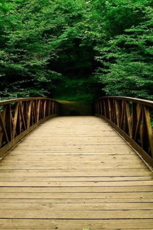 Green Forest Bridge IPhone Wallpaper Mobile Wallpaper