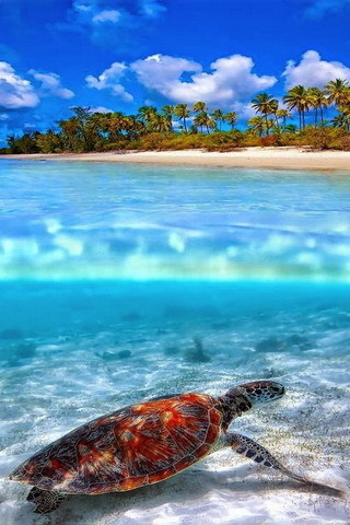 Awesome Beach Animal On Water IPhone Wallpaper Mobile Wallpaper