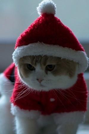 Santa Claus Cat Animal IPhone Wallpaper Mobile Wallpaper