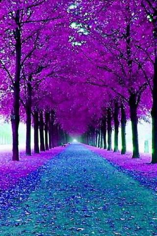 Purple Garden Trees Road IPhone Wallpaper Mobile Wallpaper