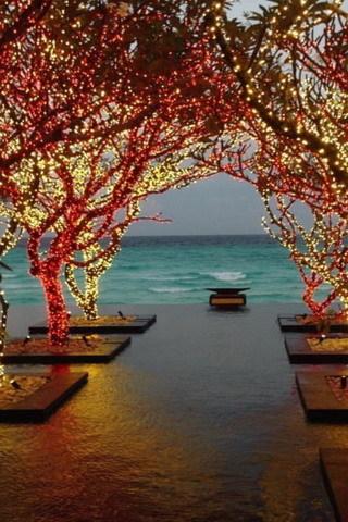 Cute View Beach Shine Lights Tress IPhone Wallpaper Mobile Wallpaper