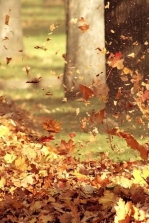 Lovely Autumn Golden Leaves Flying IPhone Wallpapers Mobile Wallpaper