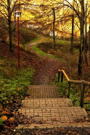 Stairs Autumn Garden Jungle Nature IPhone Wallpaper Mobile Wallpaper