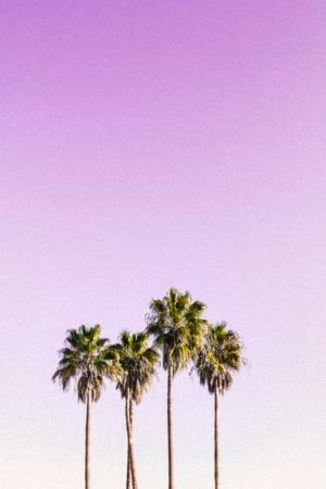 Pink Sky Plam Tree IPhone Wallpaper Mobile Wallpaper