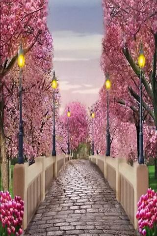 Bridge Pink Tree Garden Nature Beauty Mobile Wallpaper