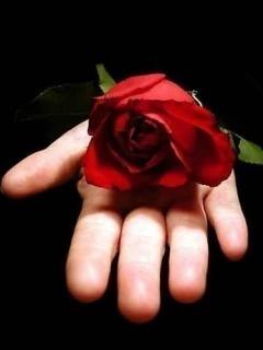Red Rose On Hand Wallpaper Mobile Wallpaper