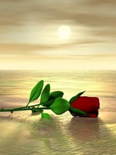 Red Rose For Lover Mobile Wallpaper