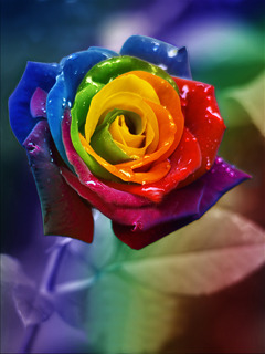 Colorful Rose Mobile Wallpaper