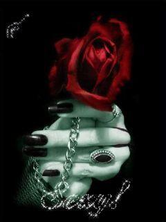 Red Rose Mobile Wallpaper