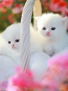 Cute Littles Mobile Wallpaper