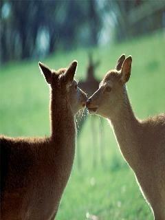 Love Animal Mobile Wallpaper