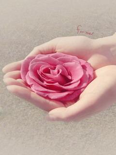 Pink Flower For Me Mobile Wallpaper