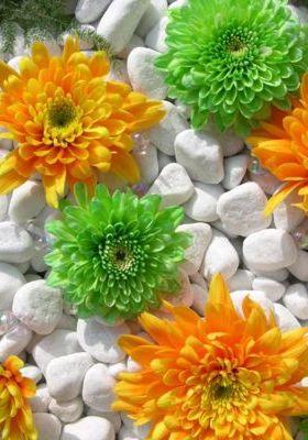 Green And Orange Dahia  Mobile Wallpaper