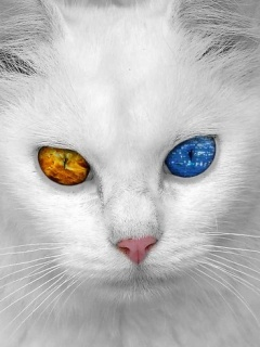 White Cat Mobile Wallpaper