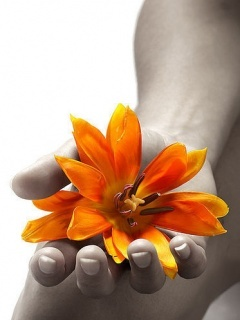 Flower In Hand Mobile Wallpaper