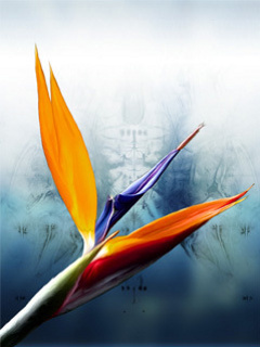 Colors Mobile Wallpaper