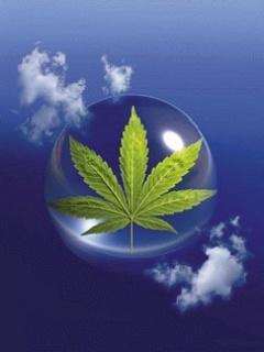 Cannabis Mobile Wallpaper