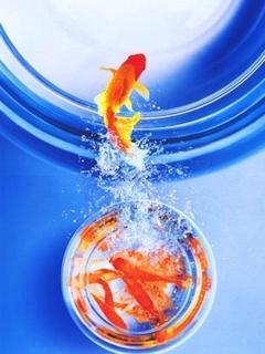 Fish Jump Mobile Wallpaper