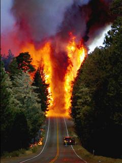 Fire Jungle Mobile Wallpaper